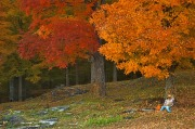 vermont-autumn-cliche.jpg