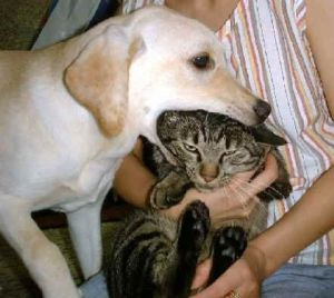 dog_eats_cat